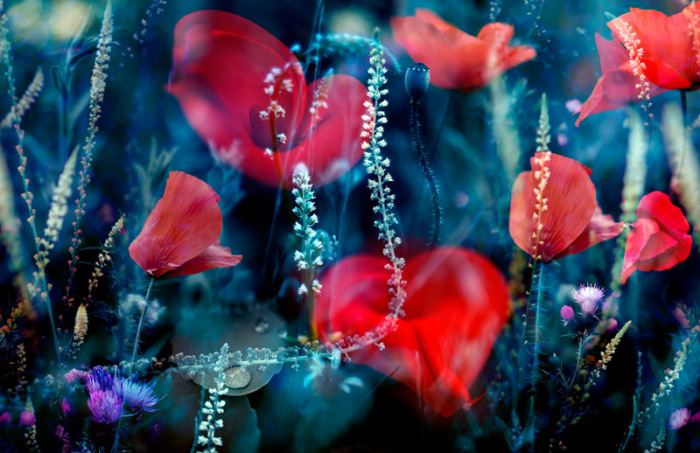 Парад цветов. Автор: Luis Mariano Gonzalez.