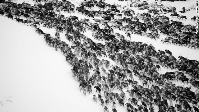 Лапландия в фотографиях Роджера Мауказеля