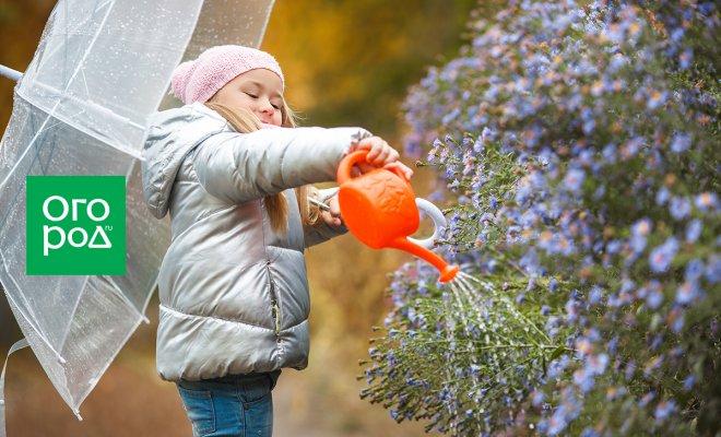 Что делать в саду, огороде и цветнике в октябре – завершаем дачный сезон правильно