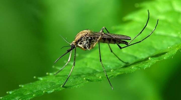 Укусы насекомых: как их отличить и какие меры принимать