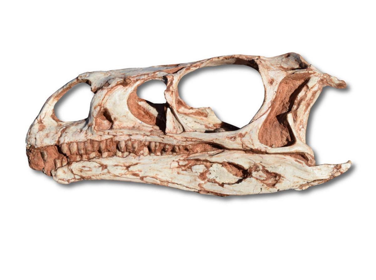 Обнаружены древнейшие динозавры с длинной шеей