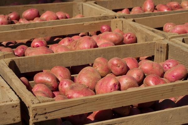 Ящики с картофелем