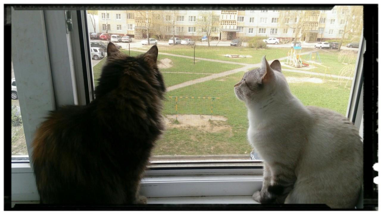 «К нам пришел милый котик!» Девушка уезжала из отпуска домой, а кот смотрел на нее грустными глазами…
