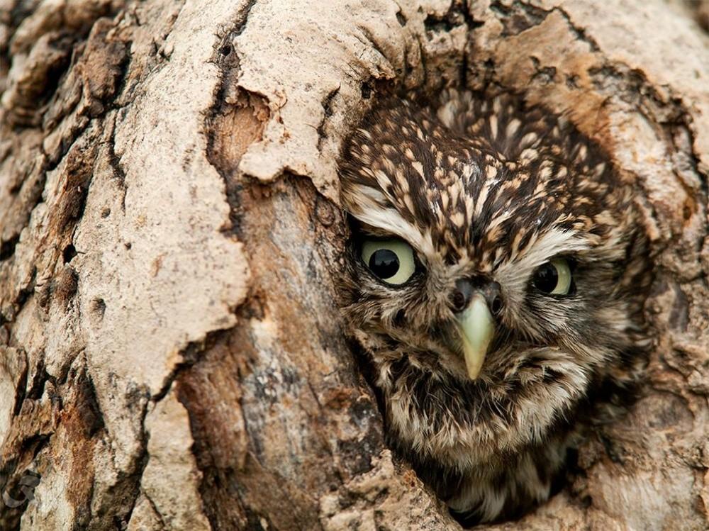 natgeo33 Topo Fotografias National Geographic setembro