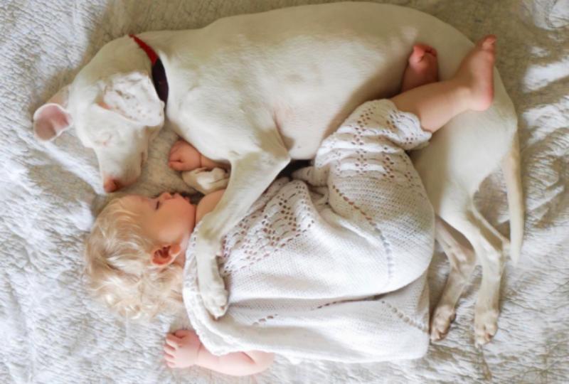 Маленький человек с большим сердцем: собака боится всех, кроме друга-малыша