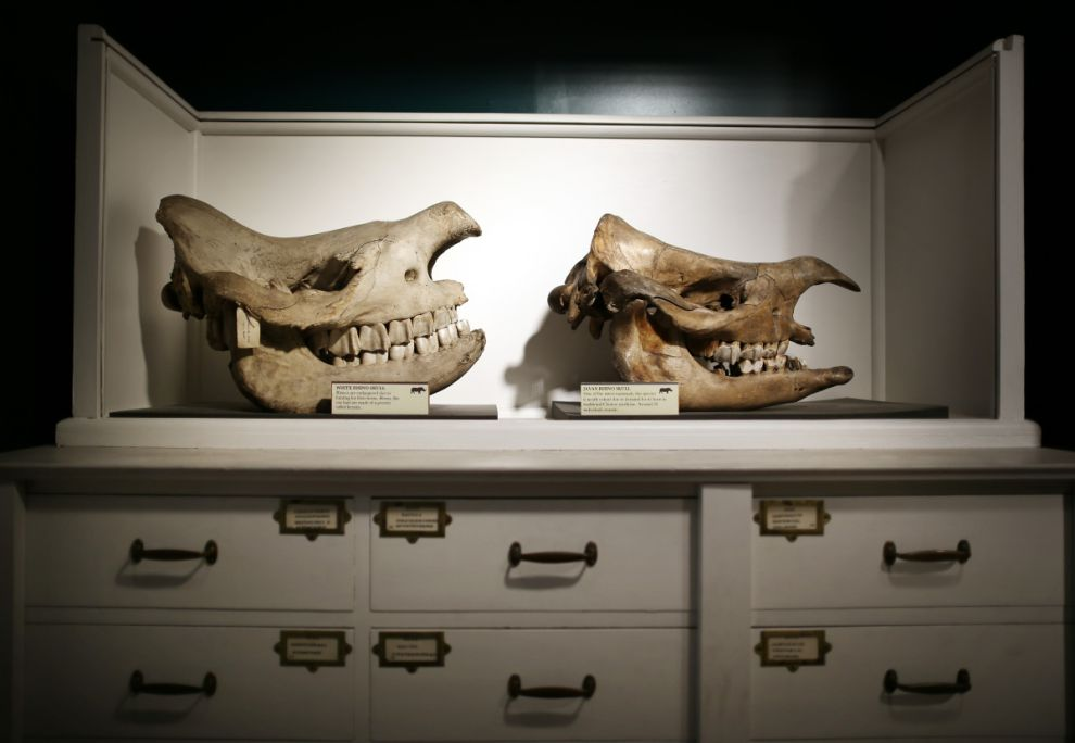 gmoz28 Лондонский музей зоологии и сравнительной анатомии Гранта