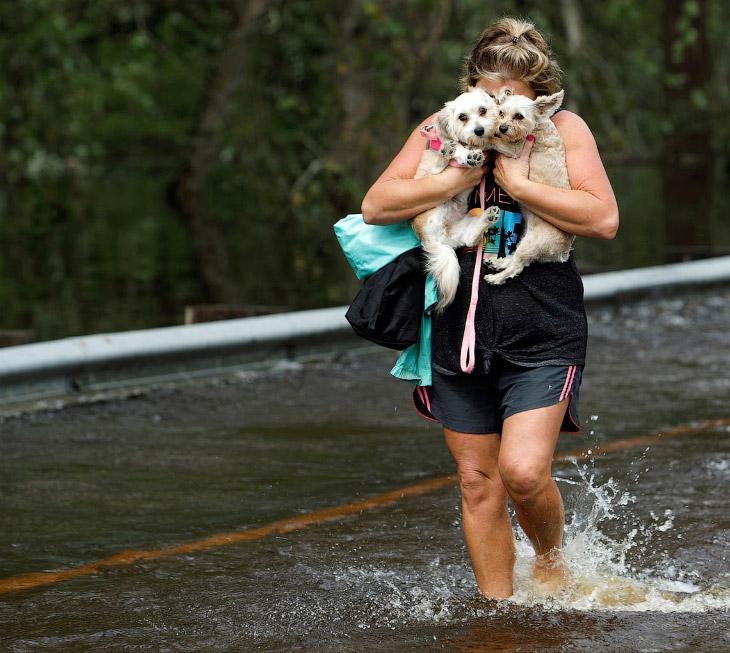 Спасение животных от урагана…
