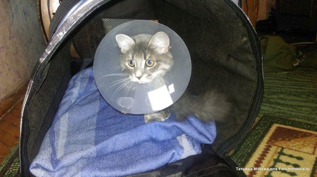 Возле подъезда лежала кошка и кричала от боли