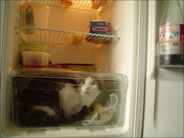 Кошачьи шалости или помощь по дому? Кто знает, что они хотели на самом деле.