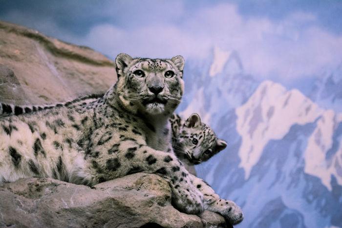 «Самка с детенышем в зоопарке»