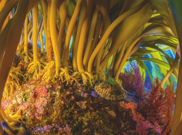 Монерон: остров морских львов