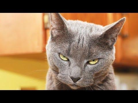 ПРИКОЛЫ С КОТАМИ И КОШКАМИ 2017 СМЕШНЫЕ КОТЫ И КОШКИ 2017 Смешные видео с животными #55