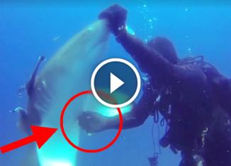 Акула попросила помощи у дайвера