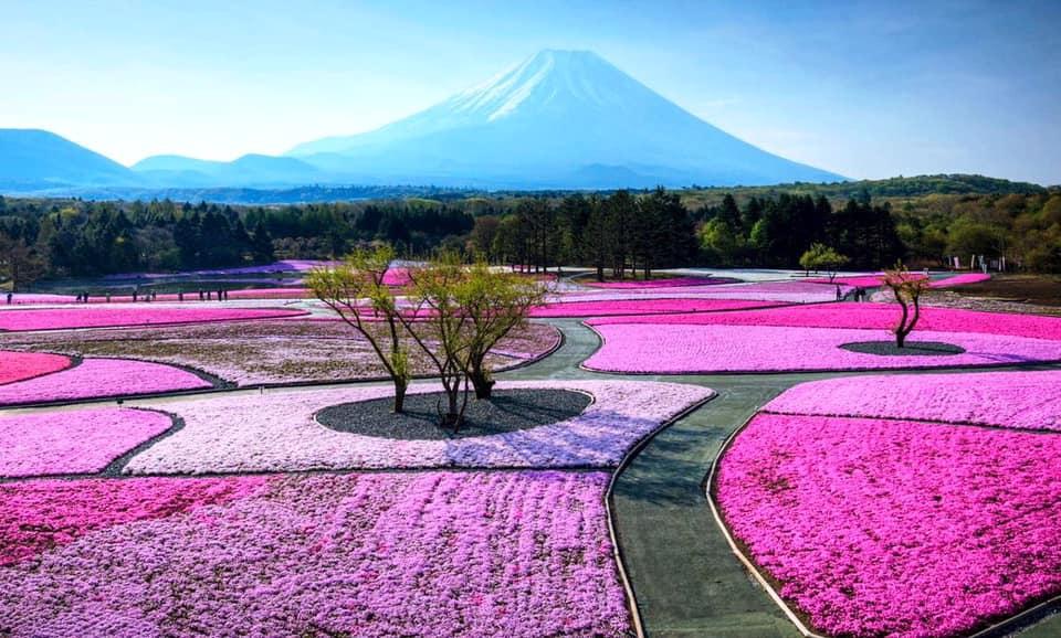 Япония приятно поражает мир.