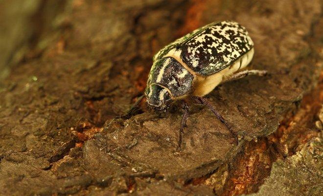 Их часто принимают за безобидных мотыльков или вовсе не замечают. А в это время урожай в опасности
