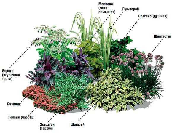 нашем сайте как красиво посадить пряную траву на саду фото автомобилей Перми