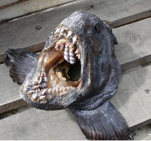 Морские монстры Фукусимы возвращаются?