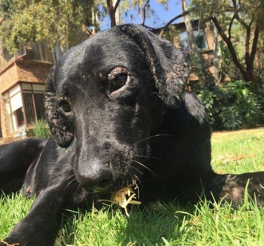 Как добрые руки могут преобразить бездомную собаку