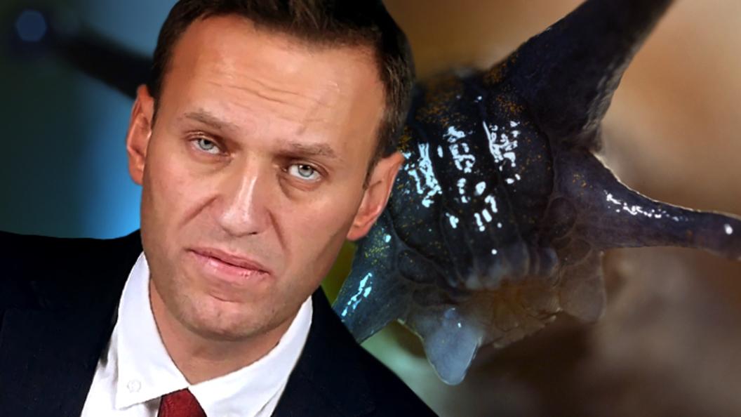 Навальный выбрал путь «слизн…