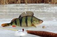 1508. Рыбалка зимой