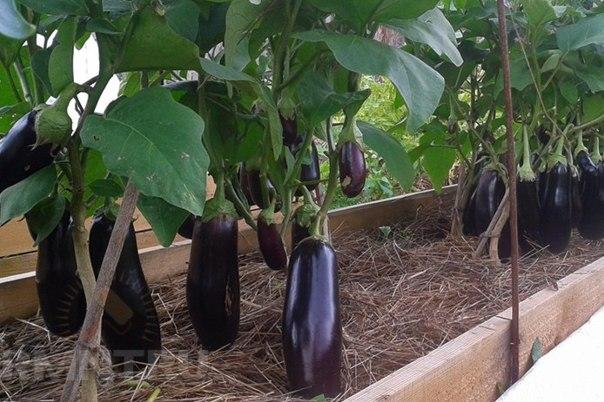 Высокие грядки Игоря Лядова: как их сделать. 10 правил хорошего компоста