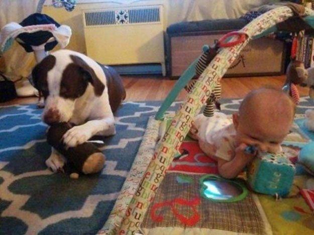 Собаки и дети — лучшие друзь…