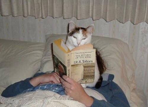 Кошки, которые мешают читать