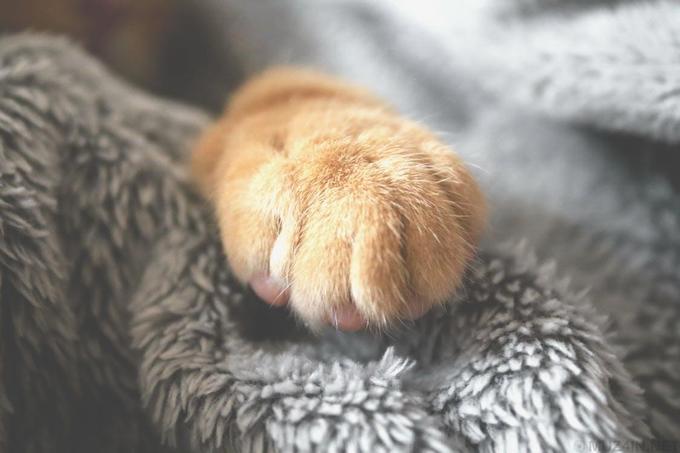 7 невероятных историй о воссоединении домашних животных с их владельцами