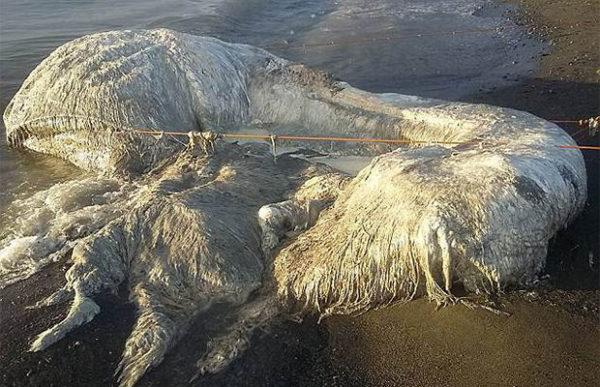 Лохматое морское чудовище напугало жителей Сан-Анонио
