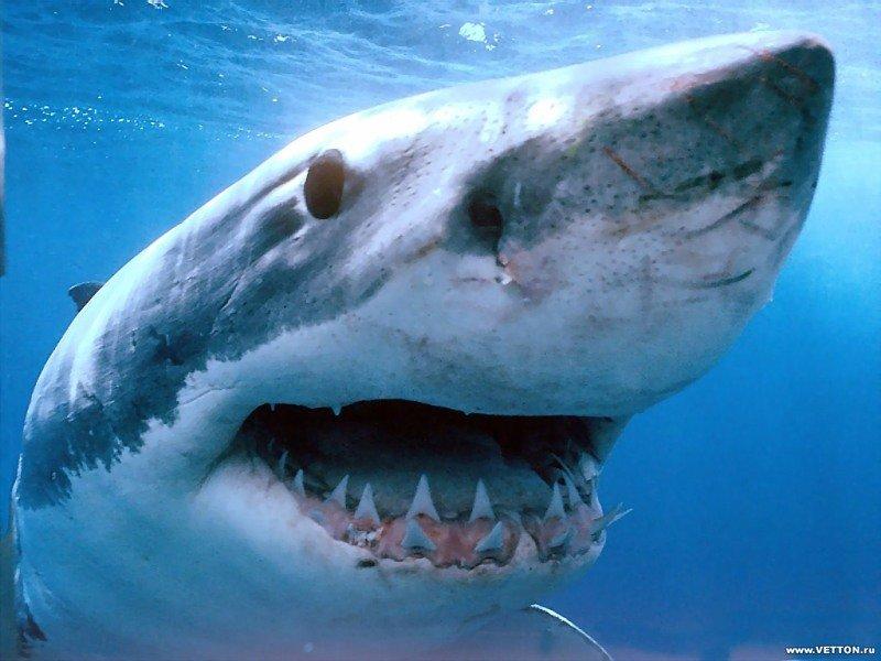 Какая она - жизнь, после нападения акулы?