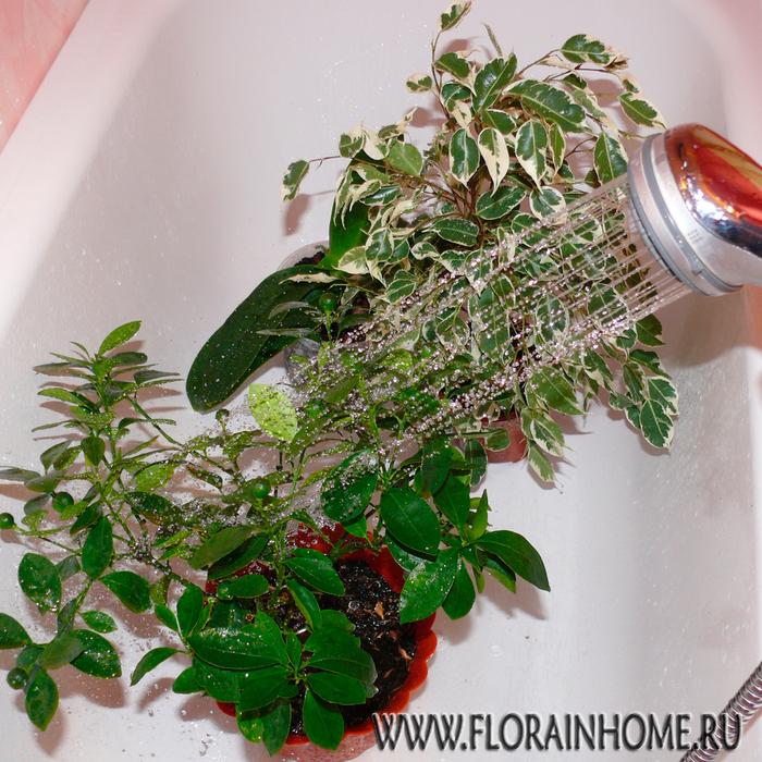 Горячий душ ... для растений