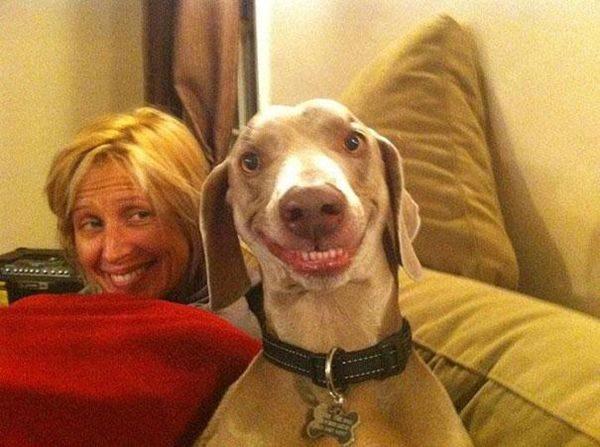 Собаки и котЯки языкомдразняки+ один жираф и еще по мелочи...