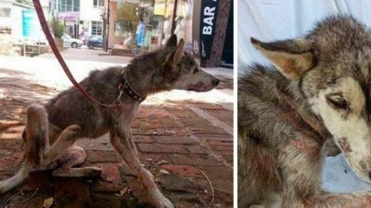 Умирающая собака прятала под животом самое ценное