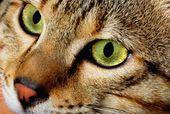 В качестве пассивного курильщика кошка долго не проживет