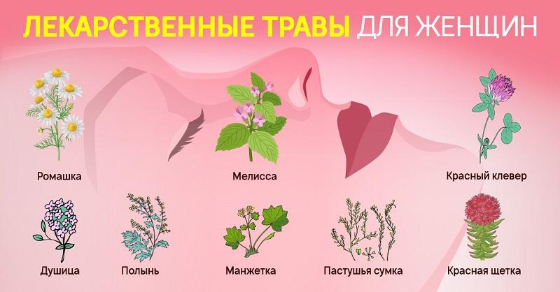 травы для женского здоровья и красоты