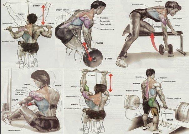 Упражнения на все группы мышц.