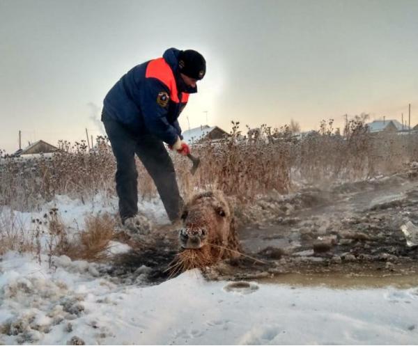 В Якутии спасли вмерзших в л…