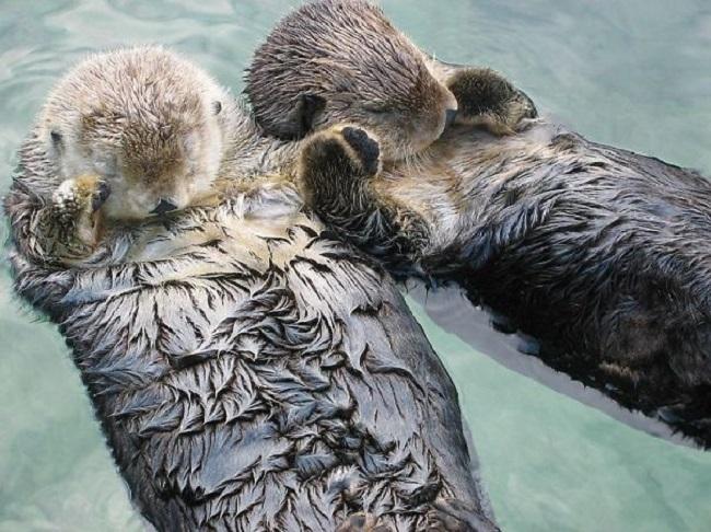 15 невероятных фактов о животных, которые перевернут твой мир с ног на голову!