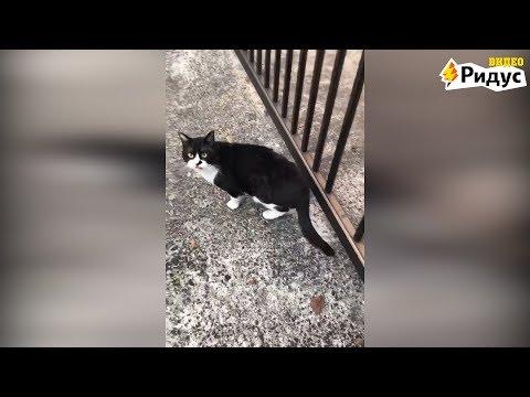 Самый неуклюжий кот в мире п…