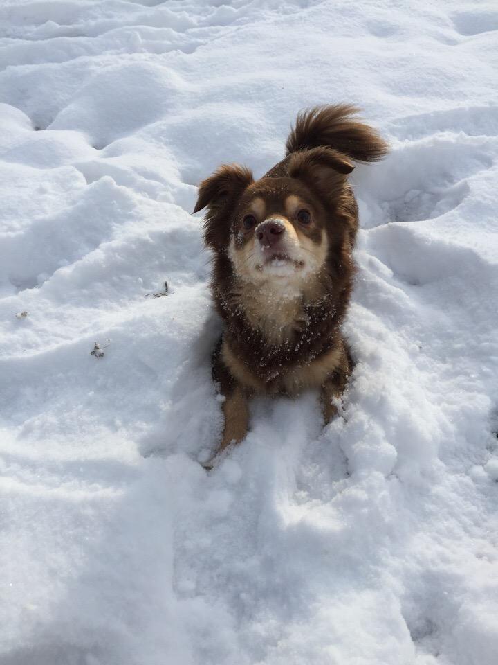 Однажды услышал про собаку, которую должны были усыпить, и сразу понял - заберу!