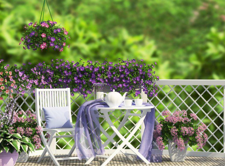 Цветы на балкон – какие выбрать?