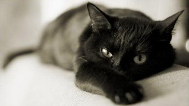 99 фактов о кошках