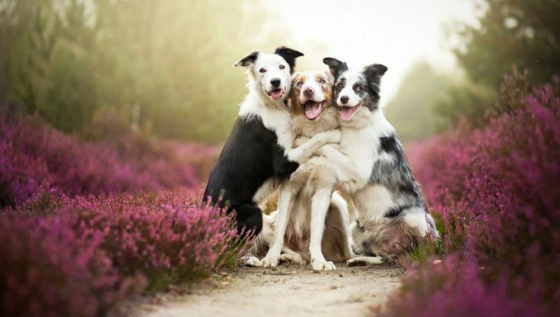 Невероятно яркие и живые портреты собак