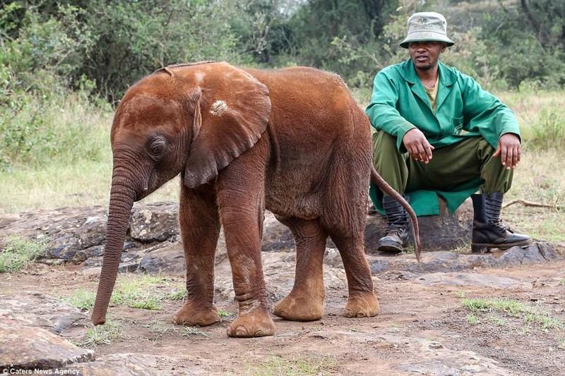 Теперь у нее есть дом, где она действительно счастлива детеныш, животные, история, кения, люди, мир, слониха, спасение