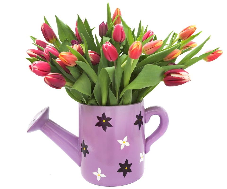 тюльпаны, горшок лейка