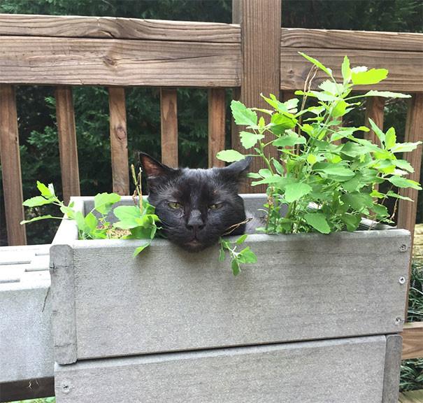 Теперь это будет моим хобби! животные, забавно, изменение сознания, кошачья мята, кошки, растения, смешно, фото