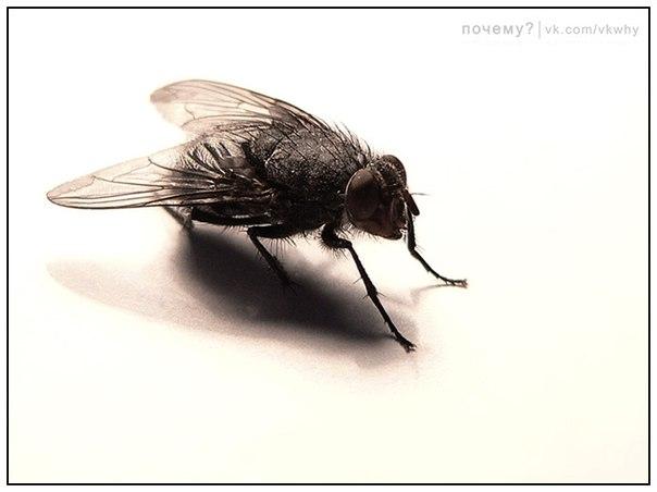 Почему мухи в конце лета начинают больно жалить?