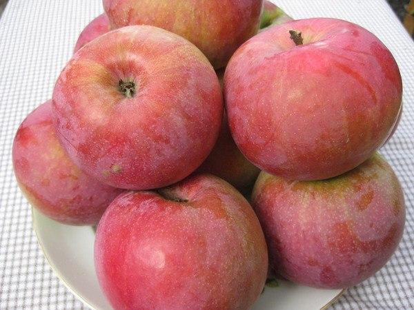 Идеальные зимние яблочки