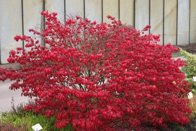 Сад в красно-багровых тонах