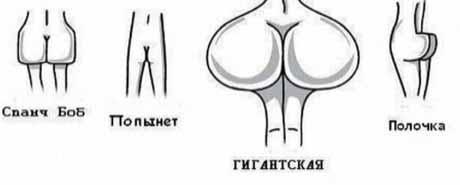 Классификация женских жоп